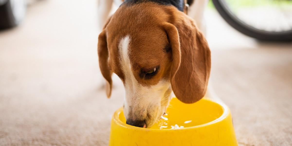 尿の回数が多く、普段より水を飲むようになった。