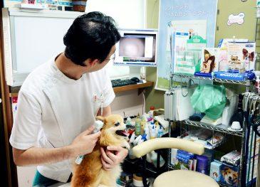 耳鼻咽喉科用 ワイヤレスカメラ ME-16