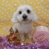 お誕生日おめでとうございます!のサムネイル