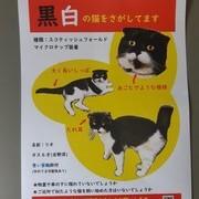 迷子の猫ちゃんのお知らせ。