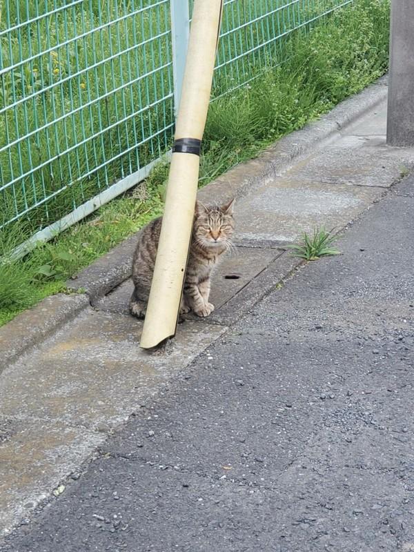 外に遊びに行く猫ちゃんも予防を!