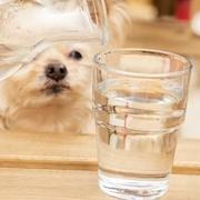 犬や猫の水分補給に便利な「PKB オーラティーン ウォータリープラス」