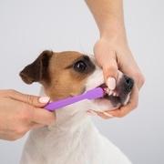 犬や猫の口臭予防の重要性とは?「ビルバック C.E.T ペリエイド デンタルブラシ」のメリットも紹介