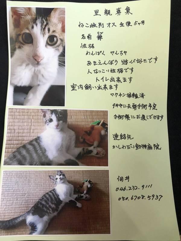 里親さん募集中の子猫ちゃんです☆(終了)