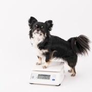 犬の肥満予防におすすめ!「Hills メタボリックスビスケット」をご紹介