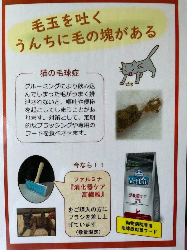 猫用ブラシプレゼント(数量限定)