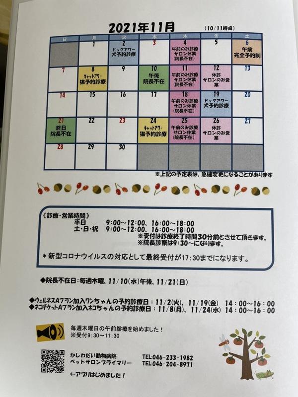 11月休診日のお知らせ☆(10/11更新)