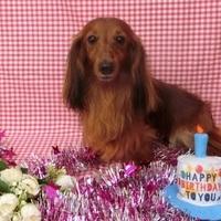 お誕生日おめでとうございます☆のサムネイル